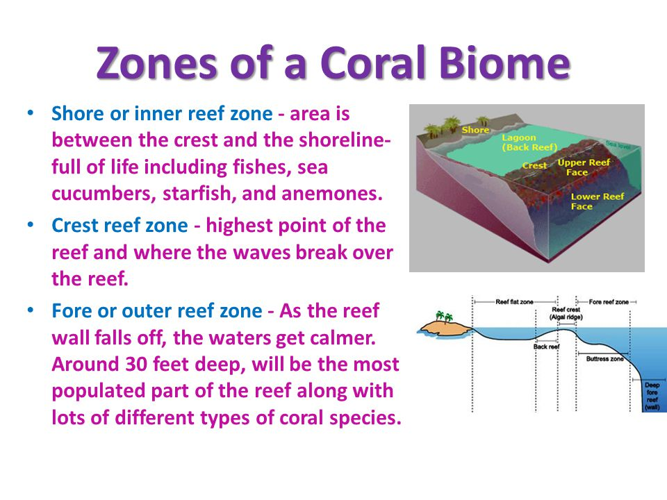 Zones of a Coral Biome