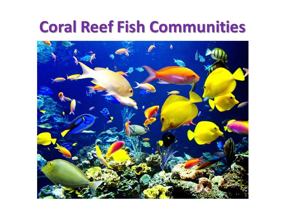 Coral Reef Fish Communities