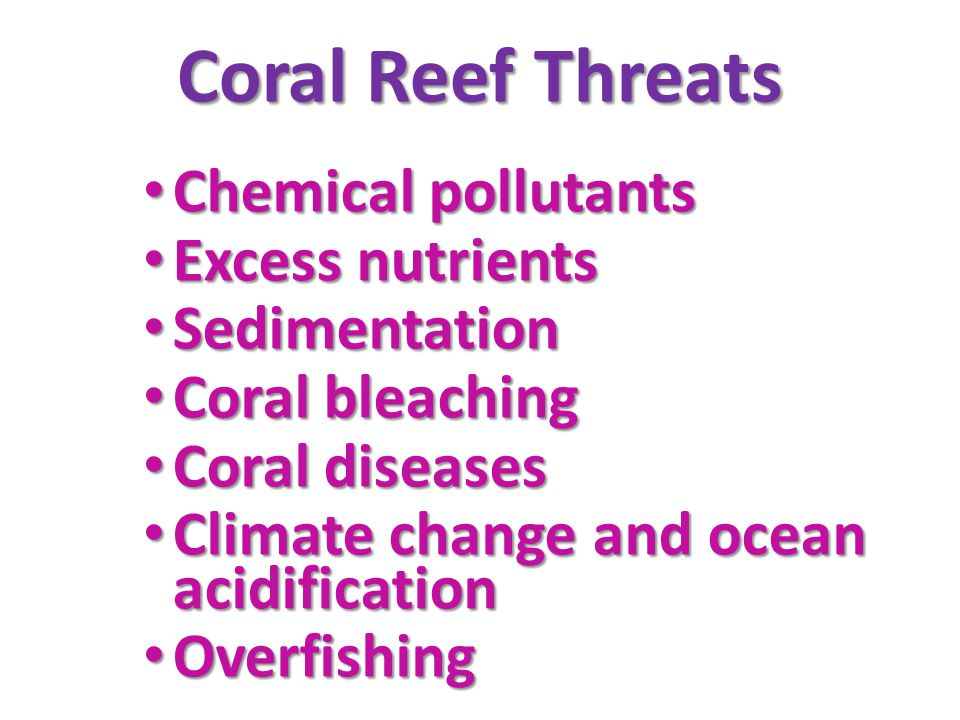 Coral Reef Threats Chemical pollutants Excess nutrients Sedimentation