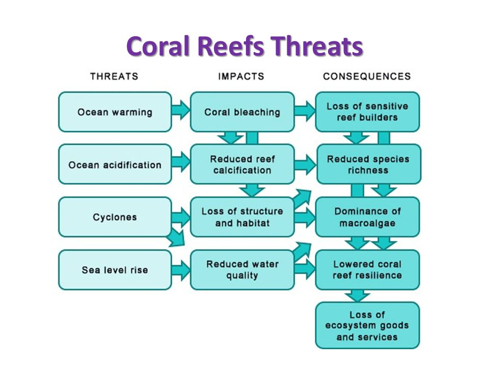 Coral Reefs Threats