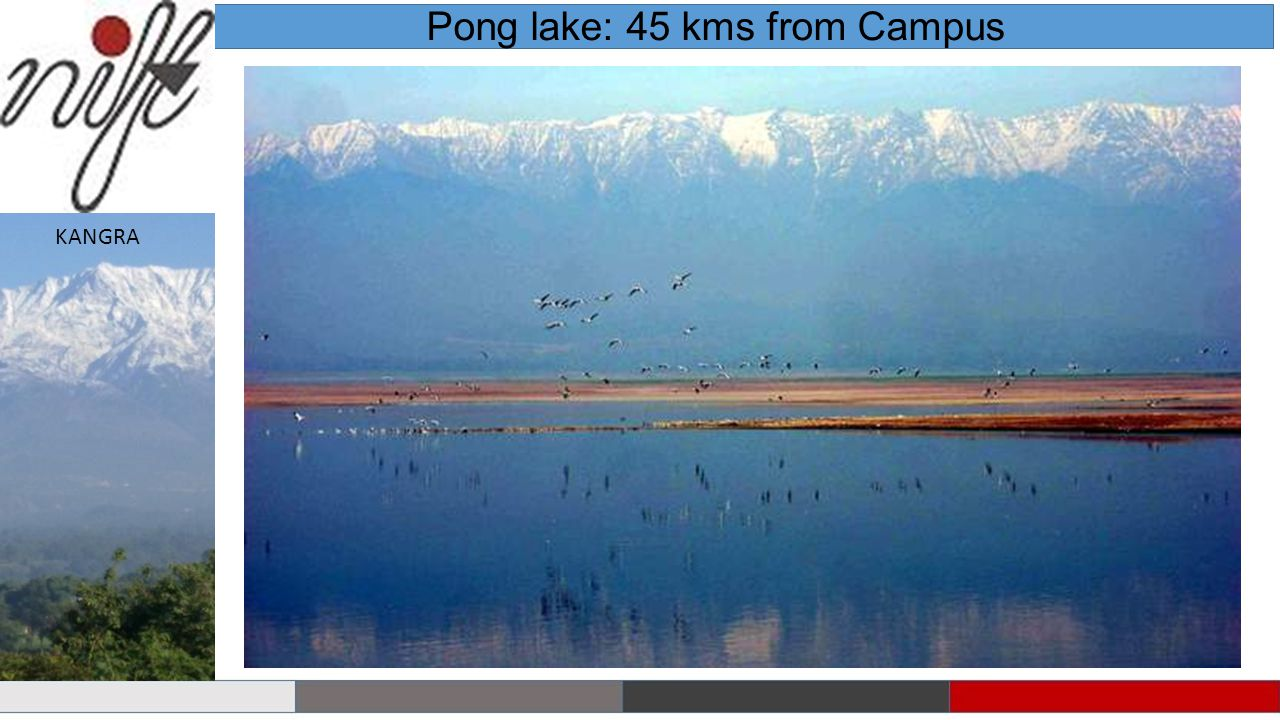 Pong lake: 45 kms from Campus