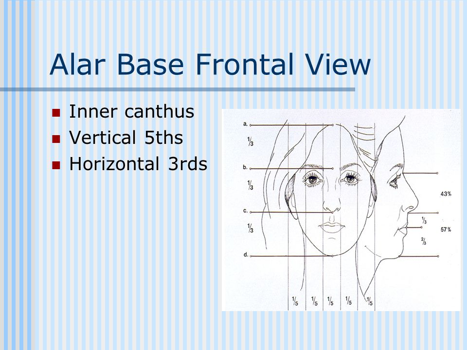 Alar Base Frontal View Inner canthus Vertical 5ths Horizontal 3rds