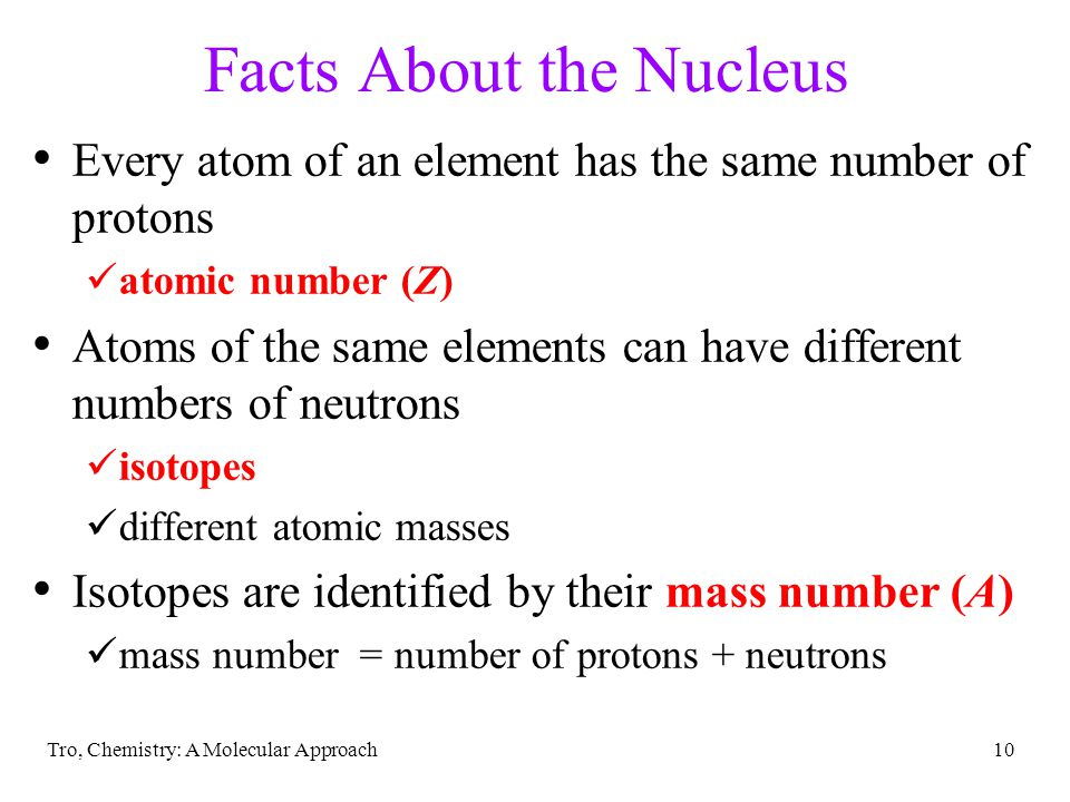 Facts About the Nucleus