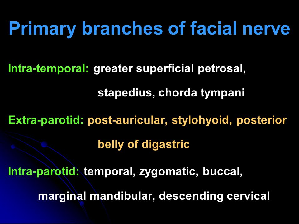 Primary branches of facial nerve