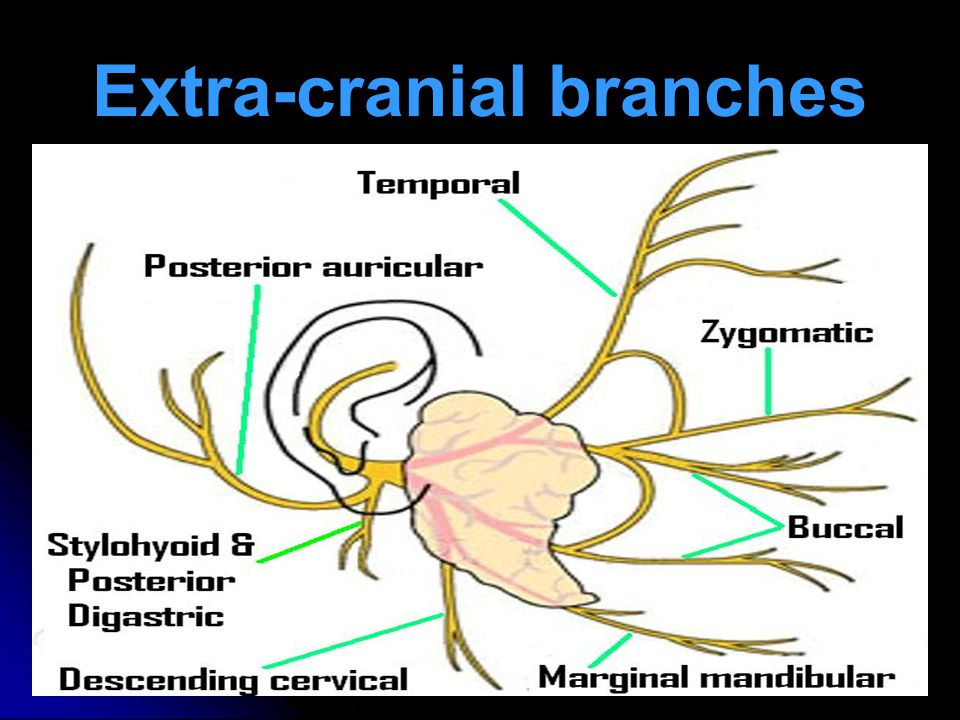 Extra-cranial branches