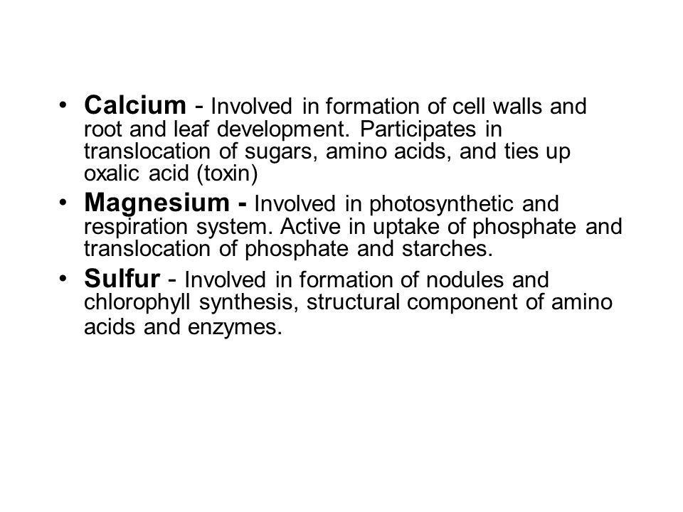 Calcium - Involved in formation of cell walls and root and leaf development. Participates in translocation of sugars, amino acids, and ties up oxalic acid (toxin)