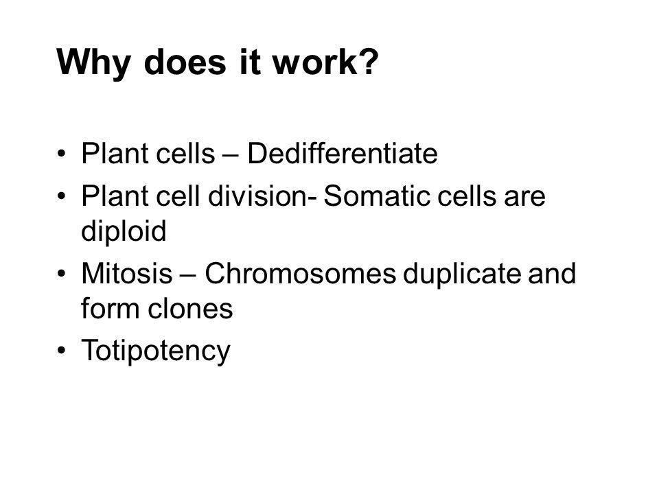 Why does it work Plant cells – Dedifferentiate
