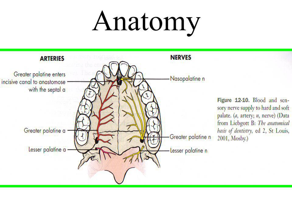Maxillary Injection Techniques Ppt Video Online Download