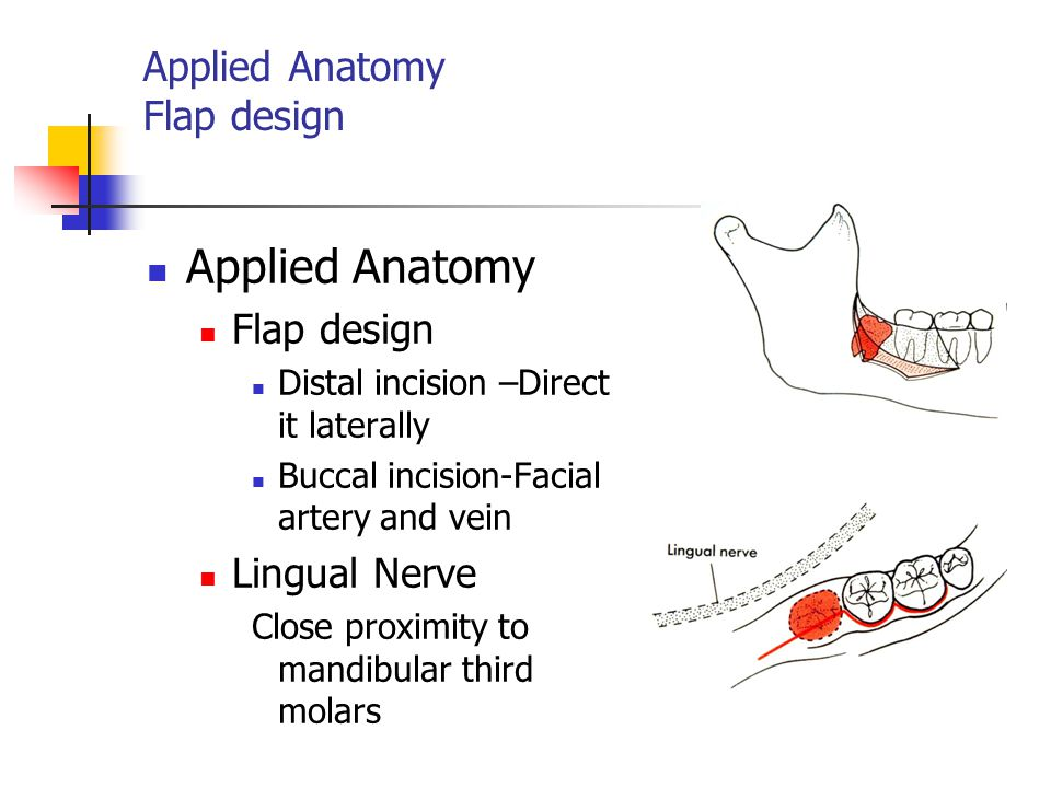 Applied Anatomy Flap design
