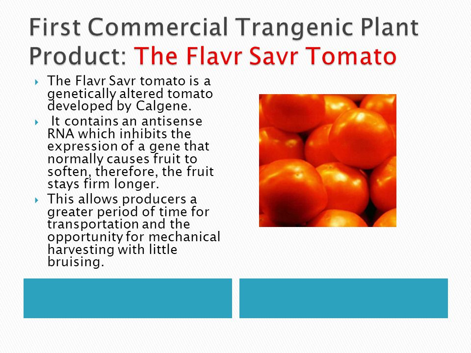 First Commercial Trangenic Plant Product: The Flavr Savr Tomato