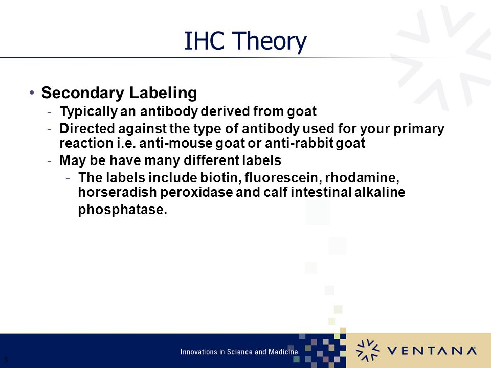 IHC Theory Secondary Labeling Typically an antibody derived from goat