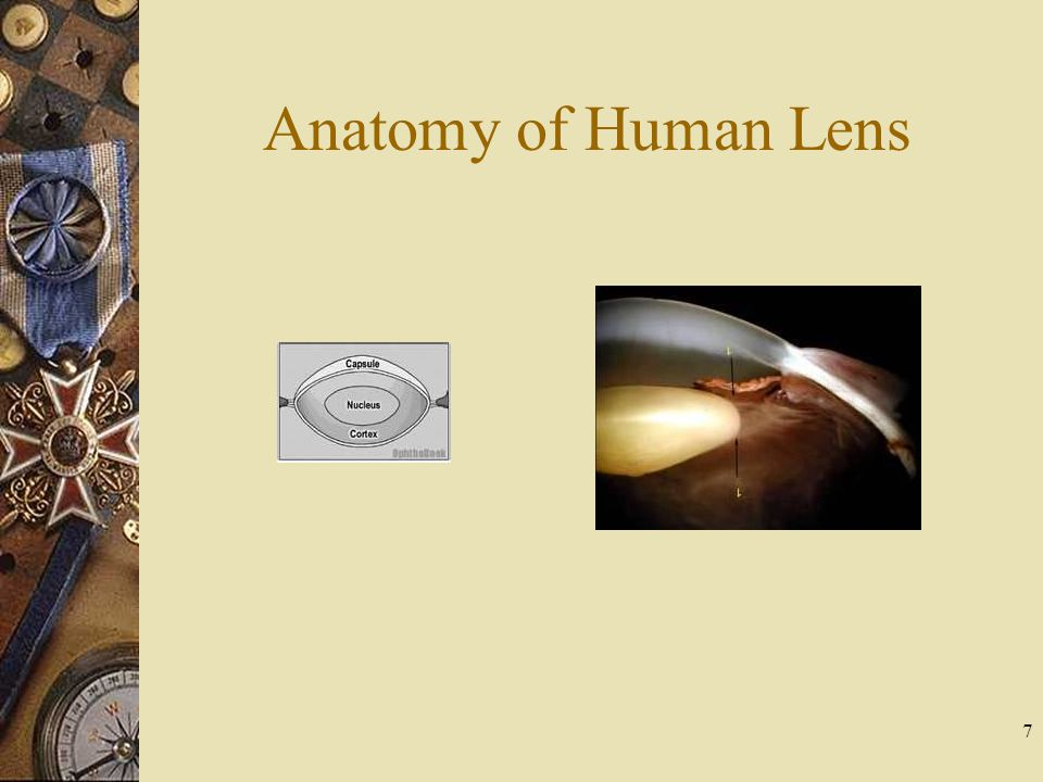 Anatomy of Human Lens