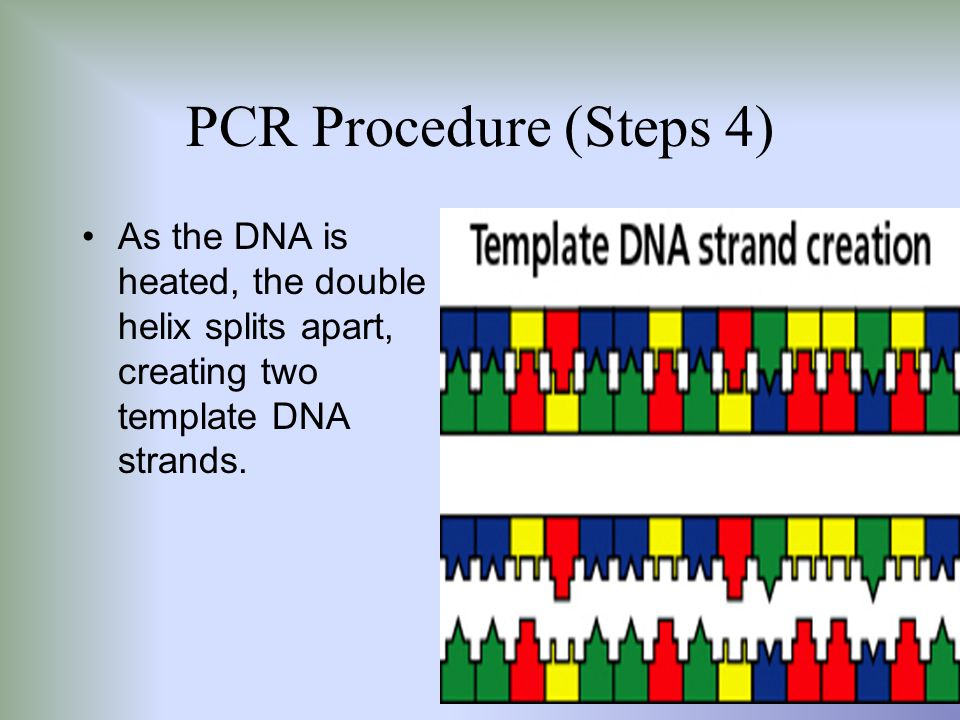 PCR, Gel Electrophoresis, and Southern Blotting - ppt video