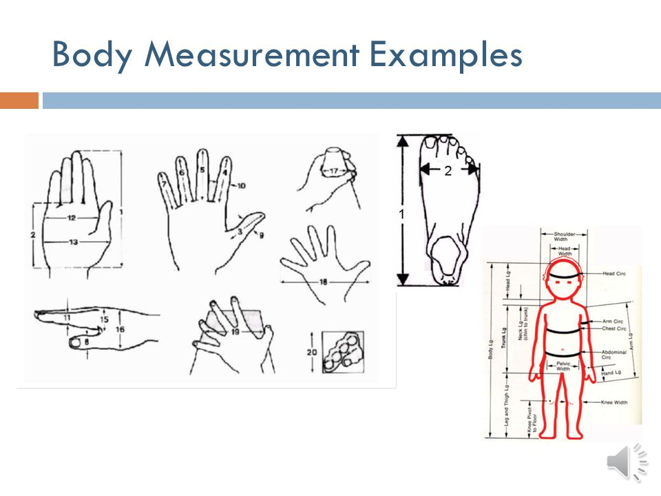 Body Measurement Examples