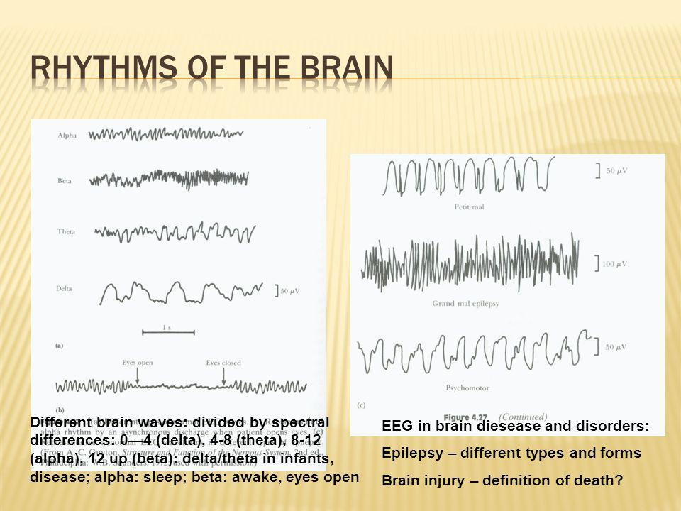 Rhythms of the Brain