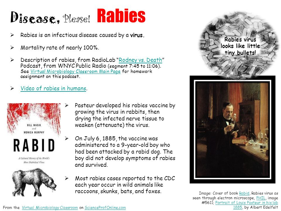 Rabies virus looks like little tiny bullets!
