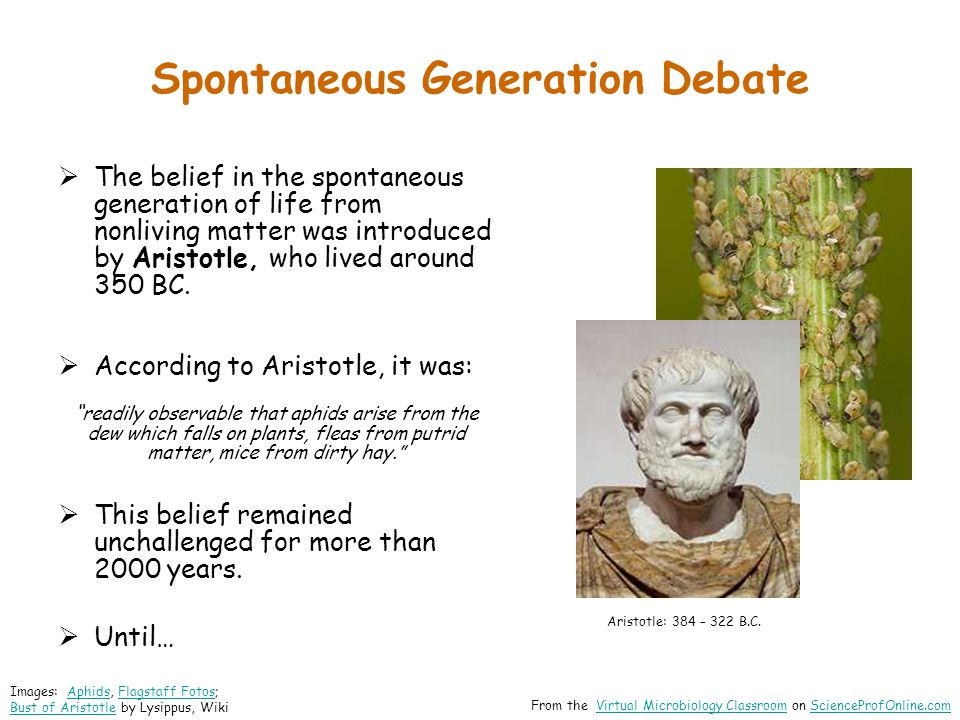 Spontaneous Generation Debate