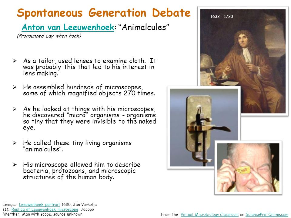 Spontaneous Generation Debate Anton van Leeuwenhoek: Animalcules (Pronounced Lay-when-hook)