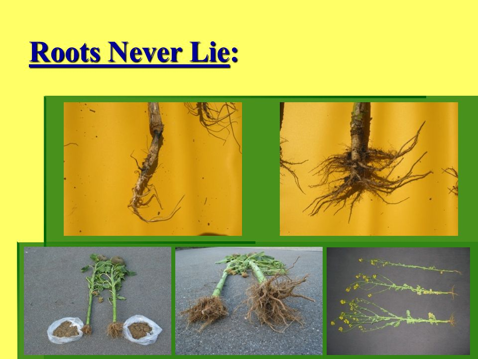 Roots Never Lie: