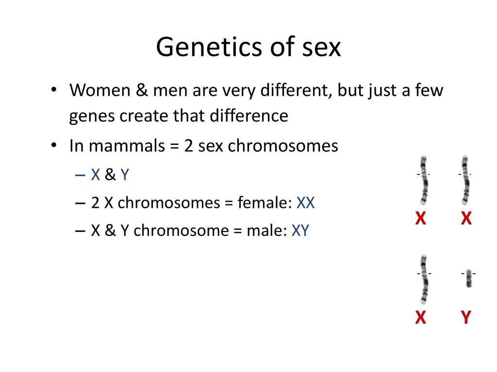 Genetics sex, hardcore sex video gallery