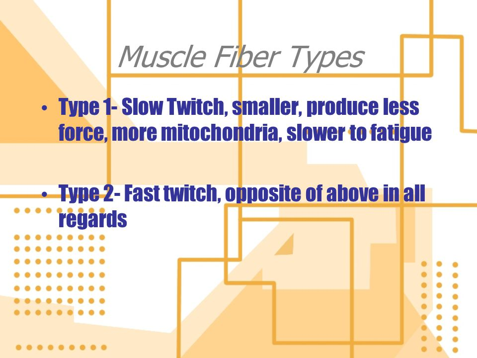 Muscle Fiber Types Type 1- Slow Twitch, smaller, produce less force, more mitochondria, slower to fatigue.