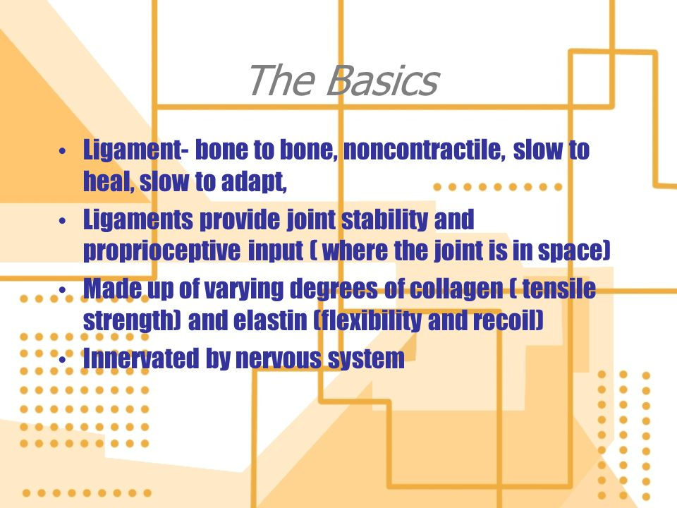 The Basics Ligament- bone to bone, noncontractile, slow to heal, slow to adapt,