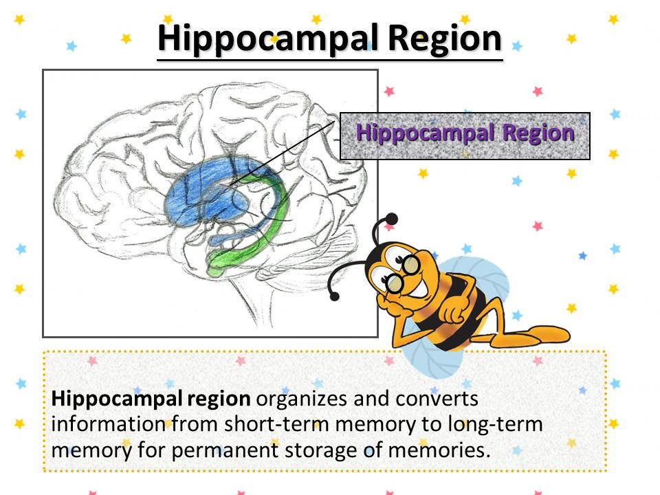 In Pursuit Of Memory A Lesson On The Basics Of Brain Anatomy Ppt