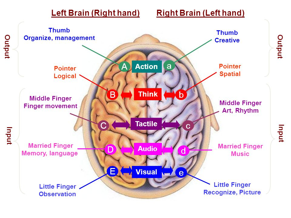 Left Brain (Right hand) Right Brain (Left hand)
