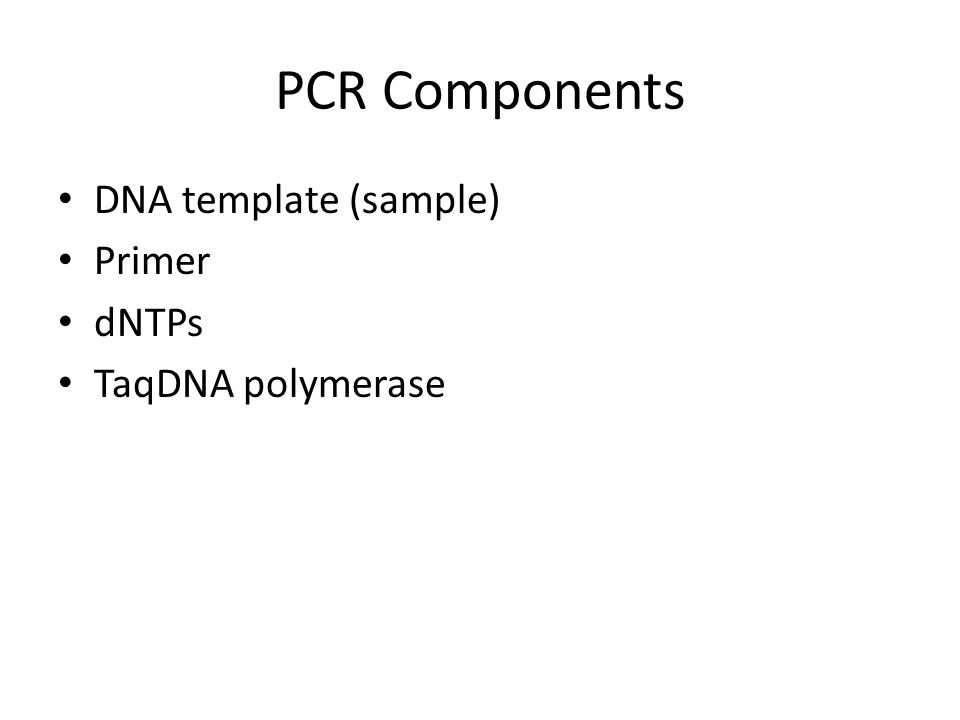 PCR Components DNA template (sample) Primer dNTPs TaqDNA polymerase