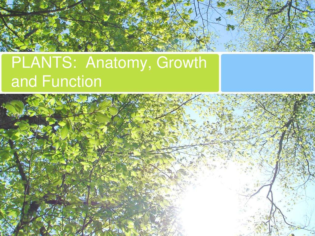 Plants Anatomy Growth And Function Ppt Download