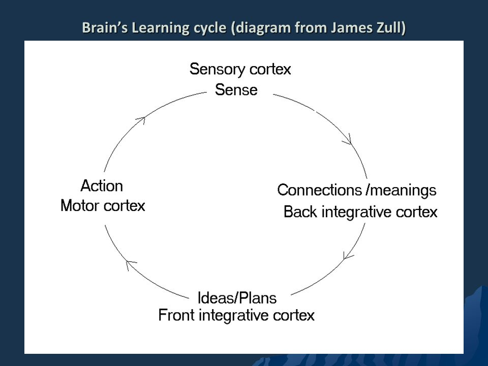 Brain's Learning cycle (diagram from James Zull)