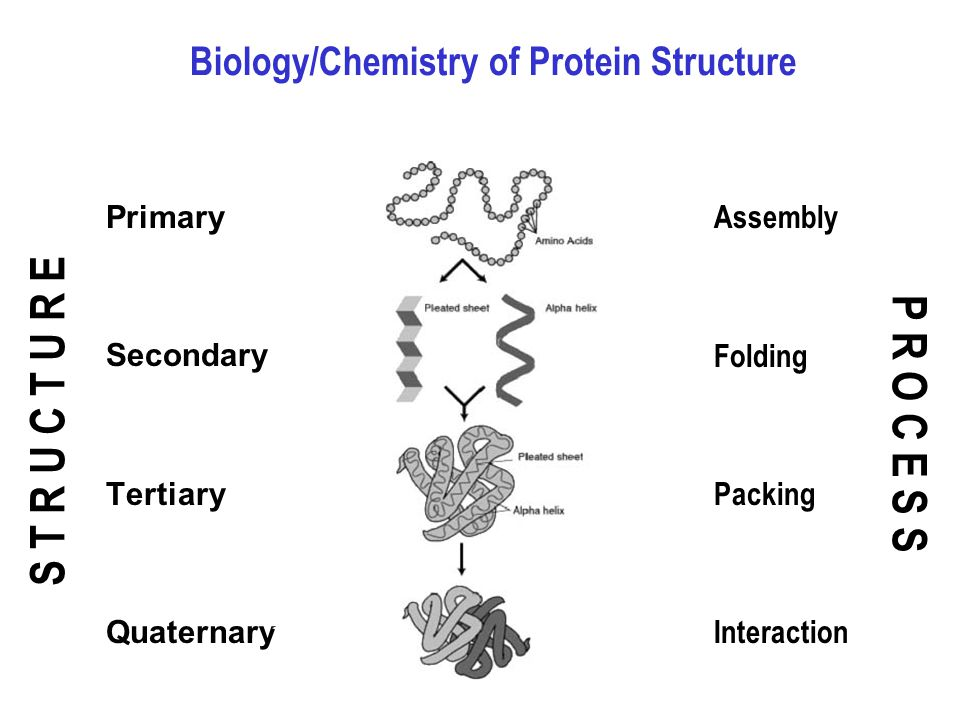 Protein Structure Ppt Video Online Download
