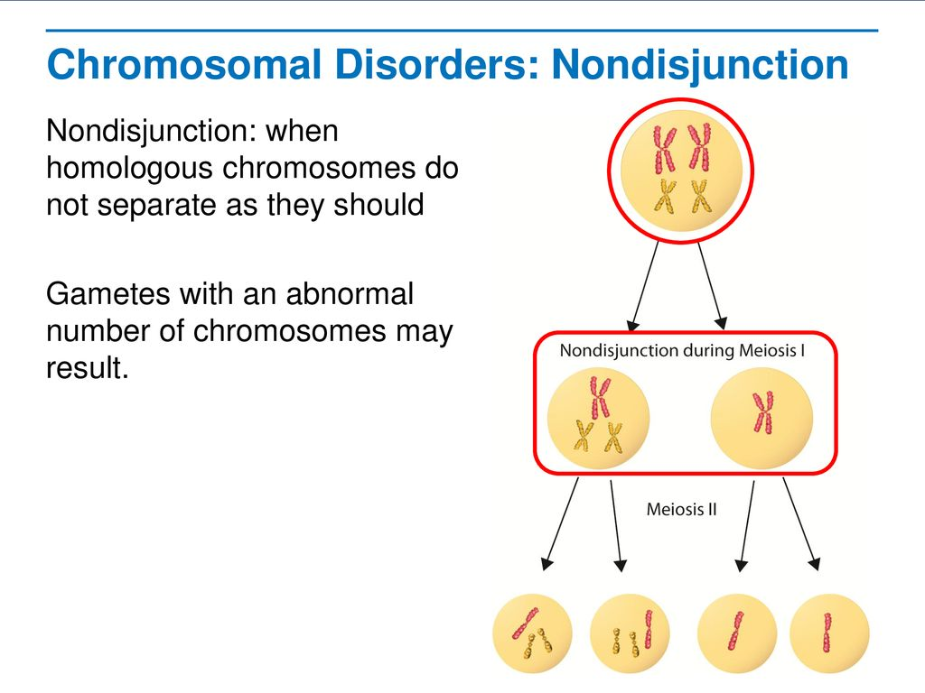 Human Genetic Disorders Ppt Download