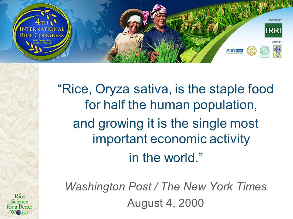 Rice, Oryza sativa, is the staple food for half the human population,