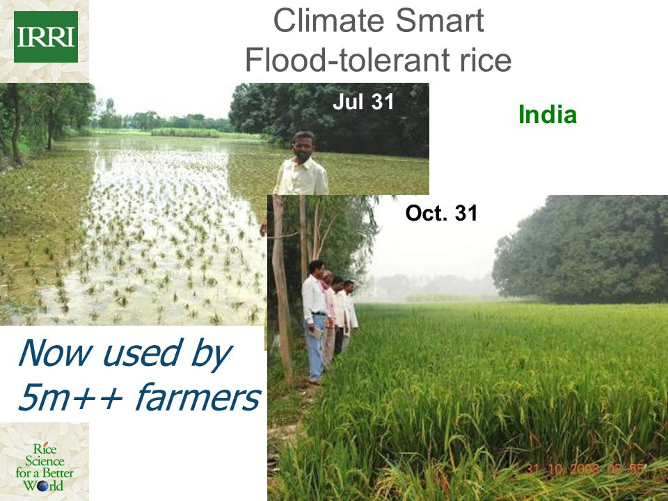 Climate Smart Flood-tolerant rice