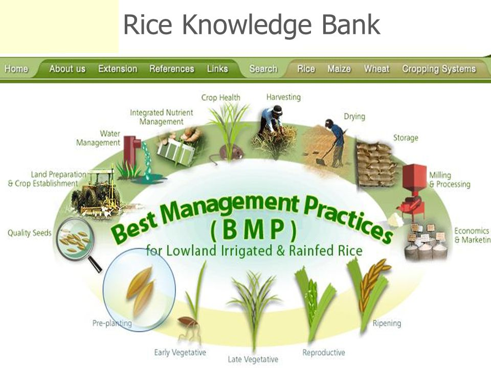 Rice Knowledge Bank Do live demo to find fact sheets in RKB 26