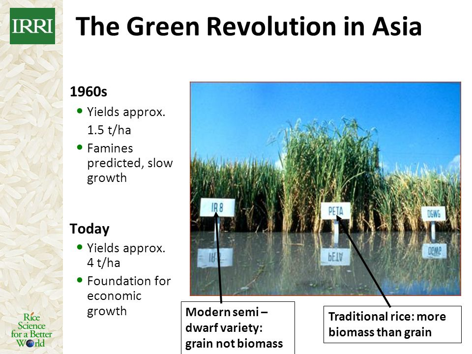 The Green Revolution in Asia