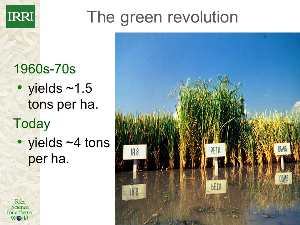 The green revolution 1960s-70s yields ~1.5 tons per ha. Today