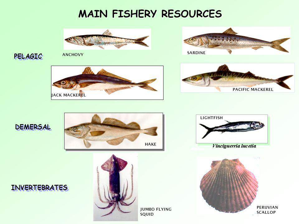 MAIN FISHERY RESOURCES