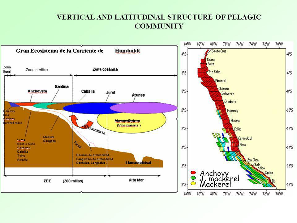 VERTICAL AND LATITUDINAL STRUCTURE OF PELAGIC COMMUNITY