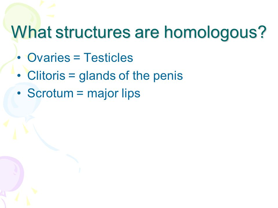 What structures are homologous