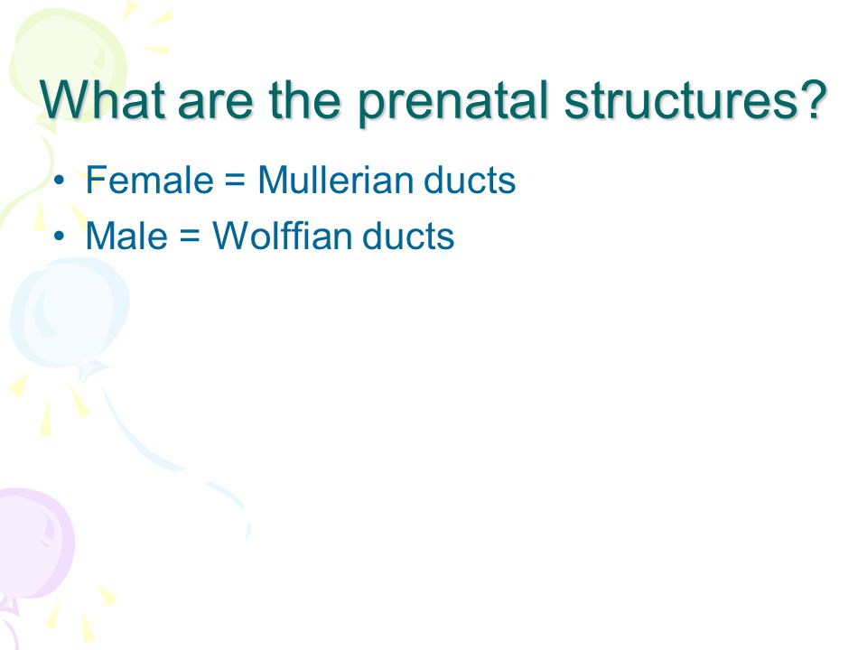 What are the prenatal structures