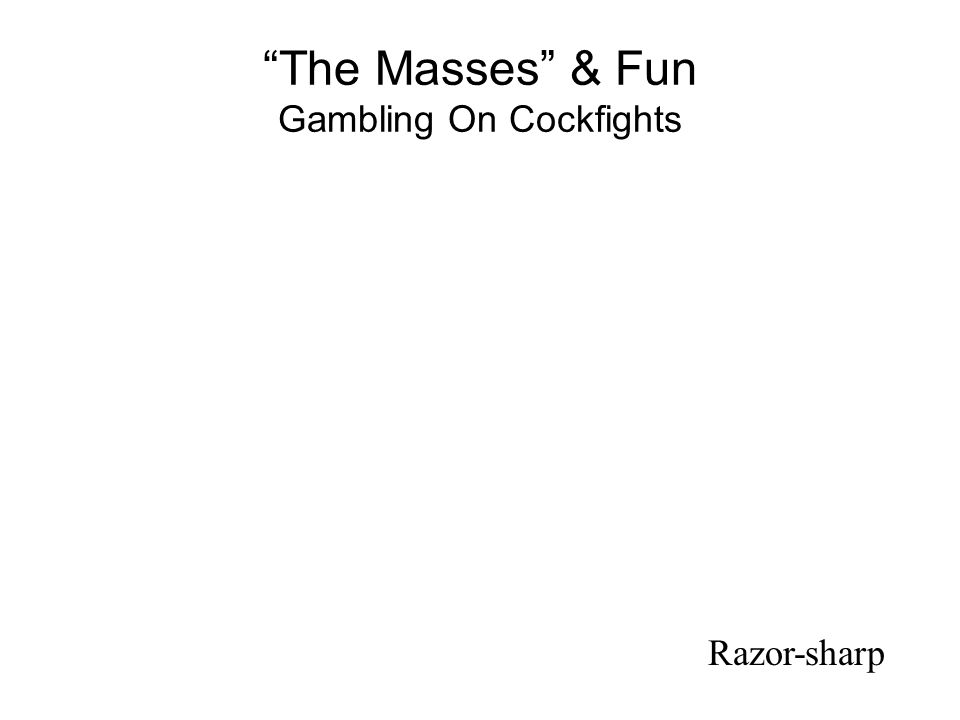The Masses & Fun Gambling On Cockfights