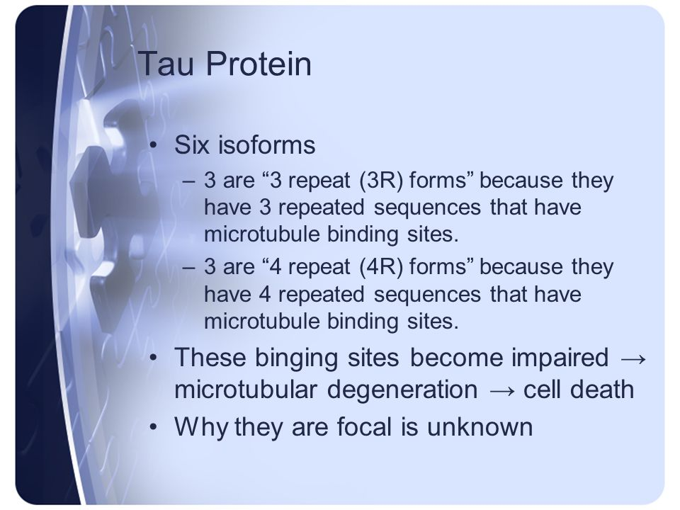 Tau Protein Six isoforms