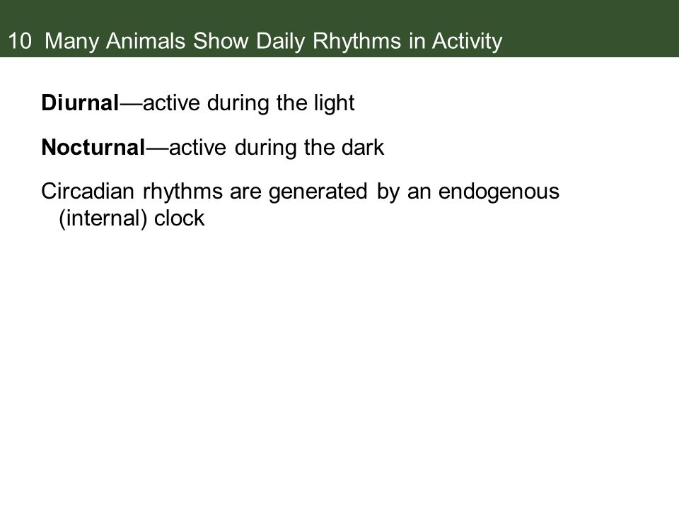 10 Many Animals Show Daily Rhythms in Activity