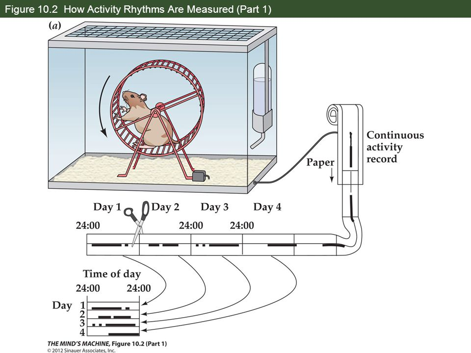 Figure 10.2 How Activity Rhythms Are Measured (Part 1)