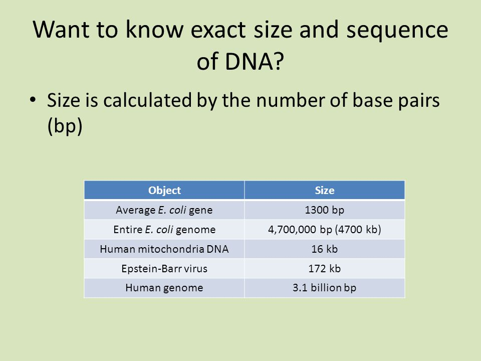 Want to know exact size and sequence of DNA