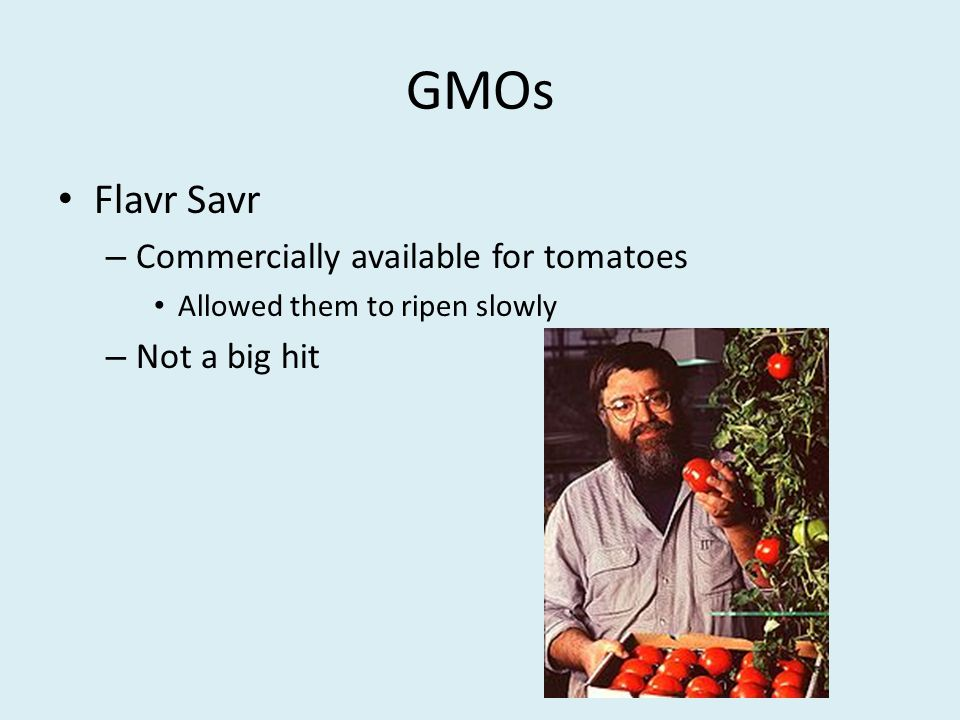 GMOs Flavr Savr Commercially available for tomatoes Not a big hit
