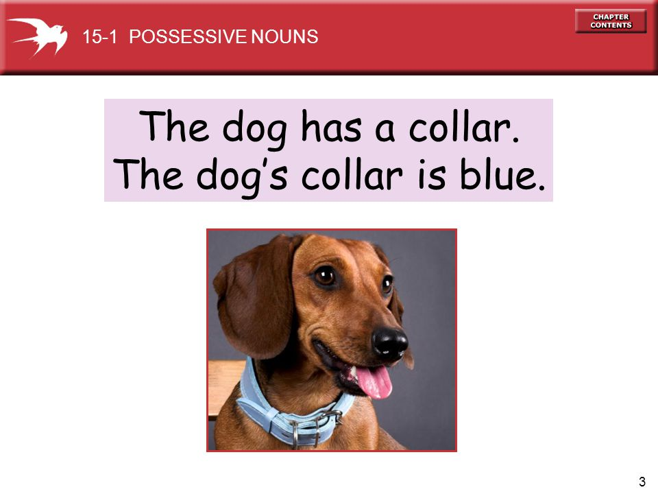 The dog's collar is blue.