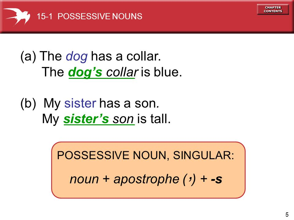 ' (a) The dog has a collar. The dog's collar is blue.